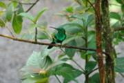 Magnificent Hummingbird - 01 - 3264 x 2176